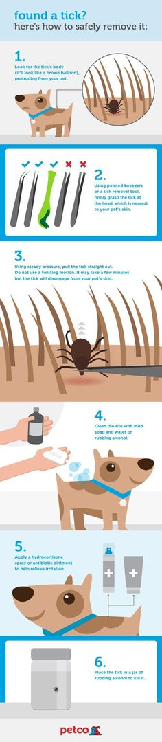 Found a tick on your pet? Here's the safe way to remove it.
