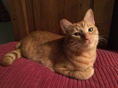 愛貓網: 是夢到在小魚堆裡嗎?融化你心的笑臉貓咪