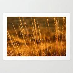 Golden Light Art Print by AnJPhotography - $18.72