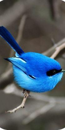 #blue bird