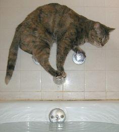 【情報】哪裡都能站!喵星人的奇異平衡感 @幸福寵物交流區 哈啦板 - 巴哈姆特