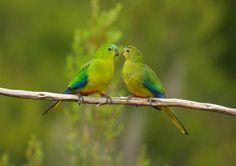(+1) тема - Красивые и редкие птицы!   НАУКА И ЖИЗНЬ