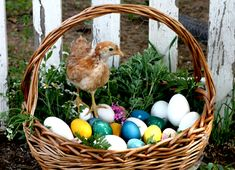 Celebrate Easter Naturally: Dyeing Eggs with Plants and Spices | Waldorf Today - Waldorf Employment, Teaching Jobs, Positions & Vacancies in Waldorf Schools