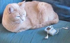I love my Sandisk Sansa and take it out walking with me most days. My cat is not impressed.