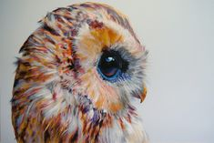 John Pusateri. Colored Owls. Combination of pencils, charcoal, and pastels. #art #drawing