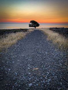Photo on the way to shoot the sunrise from the cliffs above Navarone Bay on the wonderful Greek Island of Rhodes. This was the scene as I got to the top of the hill having made the climb from the car. This is the iPhone photo which I grabbed as I hurried to catch the sunrise. #sunrise #tree #navaronebay #rhodes #greece #greekislands #rickmcevoyphotography #travelphotography #travelphotos New Travel, Travel Goals, Travel Europe, Outdoor Photography, Travel Photography, Sunrise Photography, Places To Travel, Places To See, Belle Villa
