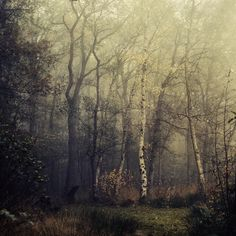 Prelude by Oer-Wout.deviantart.com  Lovely, much like a haunting dream...