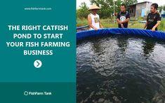 18 Best catfish farming images in 2019   Catfish farming