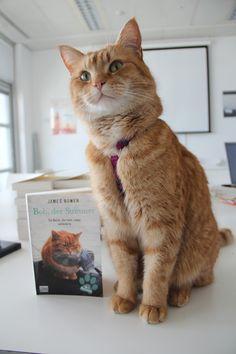 """So stolz präsentierte Bob sein erstes Buch """"Bob, der Streuner - Die Katze, die mein Leben veränderte"""". © Bastei Lübbe"""