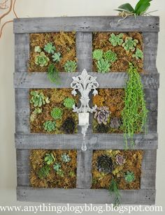 Plant succulents in a pallet and hang for a vertical garden