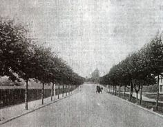The Avenue of Remembrance, Places In England, Historical Photos, 1920s, Past, History, Live, Pictures, Outdoor, Historical Pictures