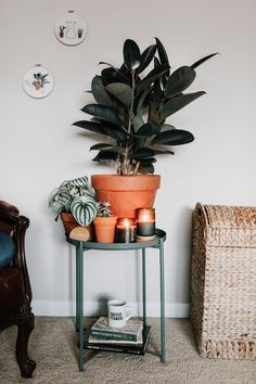How to keep your rubber tree alive! Houseplant care guide - Rubber Tree (Ficus elastica) Do you know what your perfect houseplant is? Take the quiz! Tree Interior, Interior Plants, Interior Design, Belle Plante, Ficus Tree, Ficus Elastica, Rubber Tree, House Plant Care, Tree Designs
