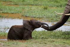 Smile.  #saveelephants