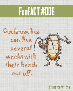 Talk about resilience! #DYK #funfacts