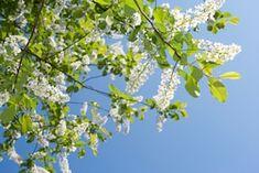 Отправить материалы Plants, Photography, Image, Design, Photograph, Fotografie, Photoshoot, Plant, Fotografia