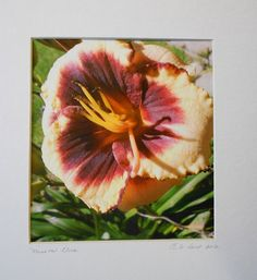 California image called Mission Flora by DarttHurstGallery on Etsy, $25.00