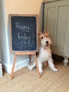 Plum & Ashby - Happy Friday from Bertie!