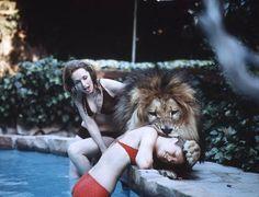 Tippi Hedren, Melanie Griffin and their pet lion