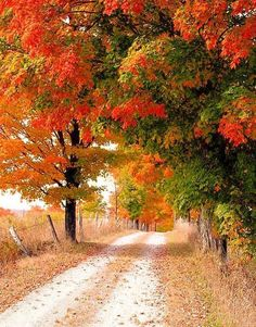 """Country road in autumn (Ontario) by Elliot Eskey~~""""Country roadaps."""" or """"Autumn Splendor""""? Fall Pictures, Fall Photos, Jardim Natural, Autumn Scenes, Jolie Photo, Beautiful Landscapes, Autumn Leaves, Autumn Fall, Countryside"""