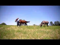 How to Lead Horses | Farm Raised With P. Allen Smith