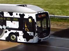 Um combustível diferente já está em pleno funcionamento na Inglaterra: ele é feito de cocô de vaca.
