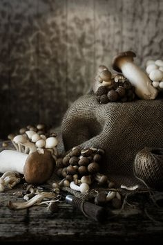 Mushrooms Mónica Pinto Photography | Photography & Food Styling