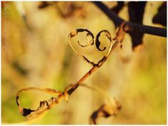 Petit coeur d'automne by Becky