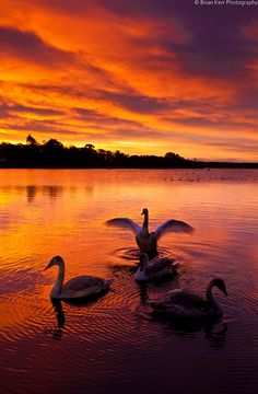 Swan Lake, sunrise Castle Loch, Lochmaben near Dumfries; photo by Brian Kerr