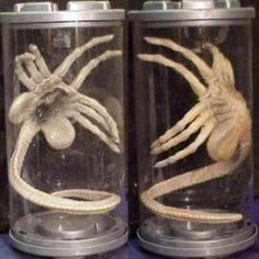 Artist sculpts 'Alien' Facehugger skeleton with bones from Earth