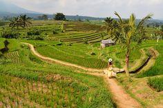 Bali - Destino de moda en los últimos años, poco se sabe de dónde queda y cómo es este tesoro natural y cultural de Indonesia. Única provincia hinduista de un país musulmán...