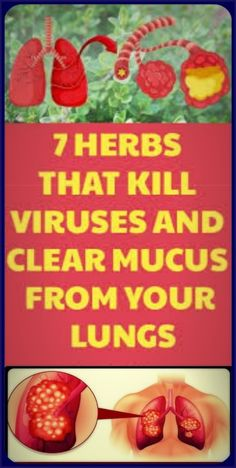 7 Herbs That Kill Viruses and Clear Mucus from Your Lungs – Herbal Medicine Book Herbal Remedies, Health Remedies, Natural Remedies, Holistic Remedies, Cough Remedies, Natural Medicine, Herbal Medicine, Medicine Book, Medicine Garden