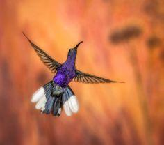 So Gorgeous hummingbird! I love Hummingbirds! Animals And Pets, Cute Animals, Hummingbird Tattoo, Gods Creation, Nature Photos, Animals Beautiful, Roman, Hummingbirds, Wrens