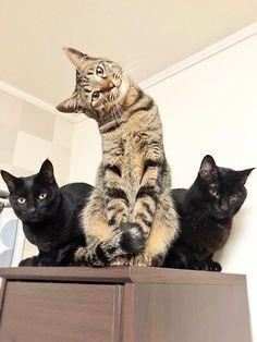 """猫野四季*さんのツイート: """"今日は、みんなと一緒に考えてみました。 #ねこ #ネコ #猫… """""""