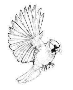New bird flying tattoo drawings ideas Cardinal Bird Tattoos, Cardinal Drawing, Red Bird Tattoos, Cardinal Birds, Body Art Tattoos, Tattoo Bird, Cardinal Ornaments, Finch Tattoo, Swallow Tattoo