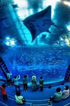 The Churaumi Aquarium is located in Okinawa. This aquarium has a Kuroshio Tank, one of the largest in the world. The tank holds giant whale sharks and manta rays. Places Around The World, Oh The Places You'll Go, Places To Travel, Places To Visit, Around The Worlds, Aquariums, Wonderful Places, Beautiful Places, Georgia Aquarium