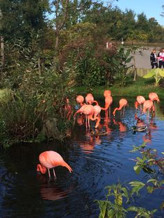 Pretty in Pink! Toronto Zoo, Pretty In Pink, Flamingo, Cure, Animals, Animales, Animaux, Flamingos, Animal