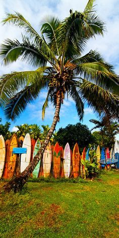 #surfboard fence in Haiku, Maui, Hawaii