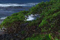 Kauai Beach III by Dennis Begnoche - Photo taken of Beach near Kapaa Kauai. Click on the image to enlarge.