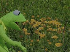 Frog Art, Kermit The Frog, Laptop Wallpaper, Lord And Savior, Cursed Images, Yellow Flowers, Cute Drawings, Puppets, Are You Happy