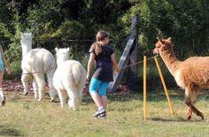 Fünf Jahre tiergestützte Angsttherapie im Waldviertel #News #Wohnen