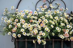 best flowers for sunny window boxes window box 3 best flowers for hot sunny window boxes perennials for sunny window boxes Window Box Plants, Window Box Flowers, Balcony Plants, Window Hanging, Hanging Pots, Window Boxes, House Plants, Window Sill, Evergreen Container
