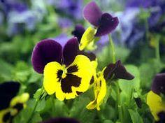 fleurs et jardins - Recherche Google