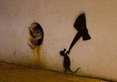 chat vs souris