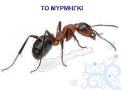 Πληροφορίες κι Εποπτικό Υλικό: Ζώα σε Χειμερία Νάρκη Animals, Animales, Animaux, Animal Memes, Animal, Animais, Dieren