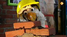 Thema: Techniek. Hoe maak je een stevig bouwwerk? Door bakstenen niet recht boven elkaar te metselen maar steeds te laten verspringen wordt een muur steviger. Een brug buigt niet door, omdat een driehoeksconstructie of een boogconstructie is gebruikt. We zien talrijke voorbeelden.