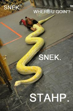 stahp. i hate looking at the snek, but oh my i think its funny.