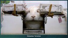 stop animal testing!!!