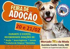 BONDE DA BARDOT: RJ: Casa dos Anjos faz campanha de adoção de animais em Macaé neste fim de semana (20 e 21/02)
