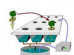 Resultado de imagen para cultivos hidroponicos caseros