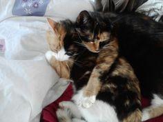 Cuddles (Sushi and Bella)